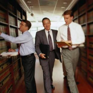 Curs avocati